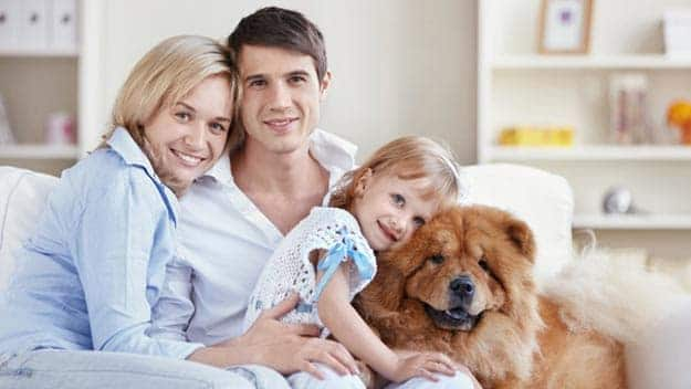 Wills & Trusts dog-young-family Direct Wills Northern Ireland